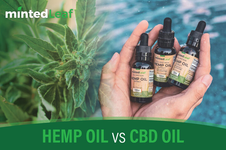 HEMP OIL VS. CBD OIL | mintedLeaf